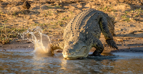 Croodile, SamuelCox Digital Download.jpg