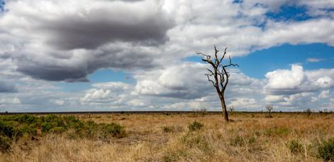 Kruger Landscape. Kruger, South Africa, 2017