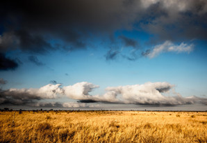 Kruger Landscape. Kruger, South Africa 2018