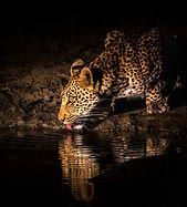Leopard7, SamuelCox Digital Download_edited.jpg