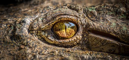 Crocodile2, SamuelCox Digital Download.jpg