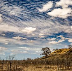 Kruger Landscape, SamuelCox Digital Down
