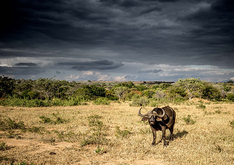 Buffalo Storm