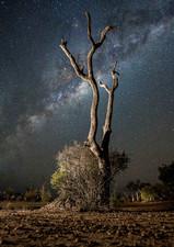 Night In The Bush