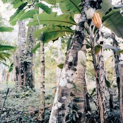 Belize-56
