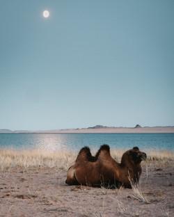 Mongolia-97