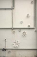 Wachs-Blüten, 2012