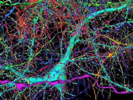 Google ajuda a mapear cérebro humano e descobre possível novo neurônio.