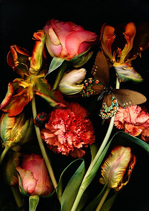 Foto Orangene Nelken und Tulpen 100 cmx 90cm