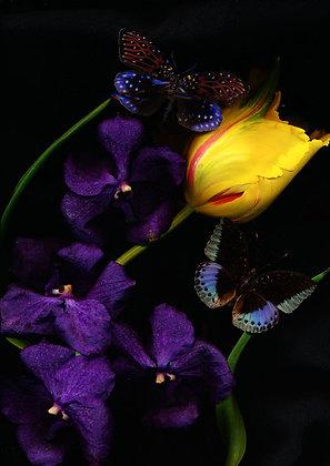 Foto Violette Orchideen 100cm x 90cm