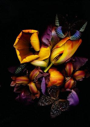 Foto Iris und gelbe Tulpen 100cm x 90cm