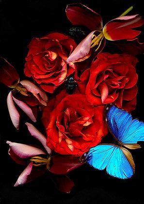 Foto rote Rosen und Schmetterling 100 cmx 90cm