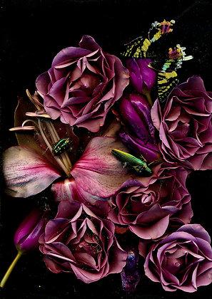 Foto Amaryllis und Rose 100cm x90 cm