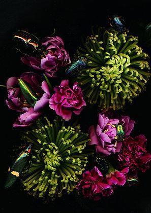Foto grüne Chrysanthemen 100cm x 90cm
