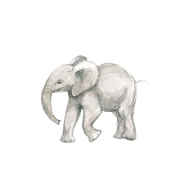 little elephant running