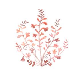 pink fynbos design