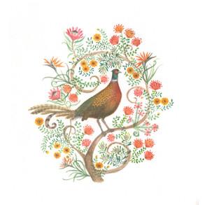 pheasant 1