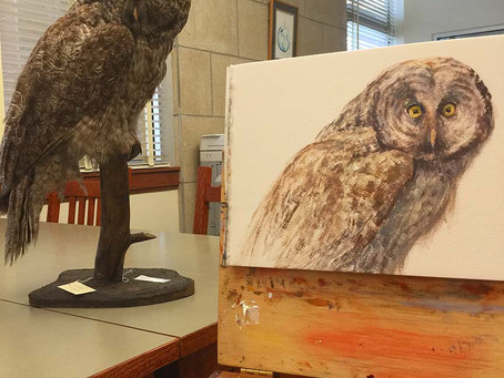 More on Great Grey Owls