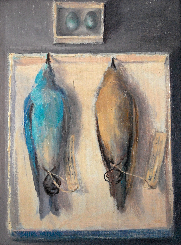 Bluebird Family At Rest
