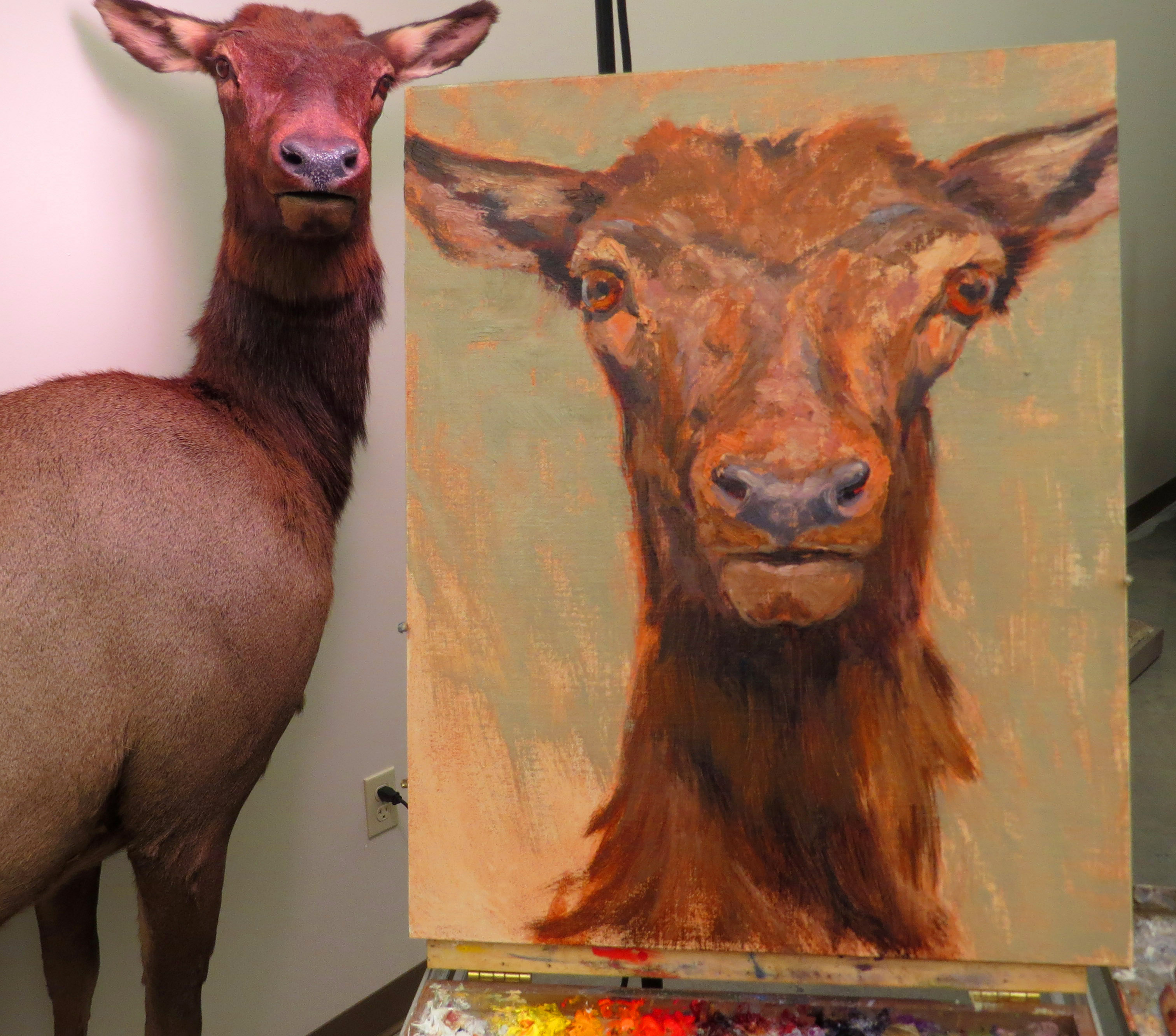 Painting an elk 'from life'