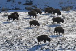 bison views 2008 02 17 026