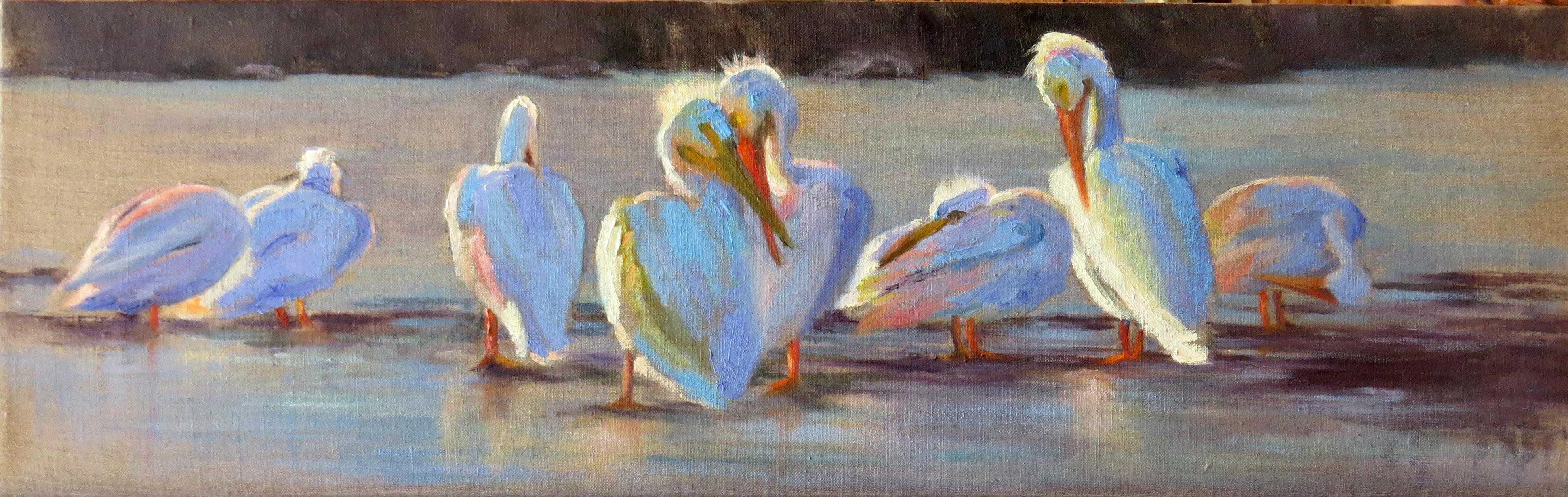 Pelican Line Up - study