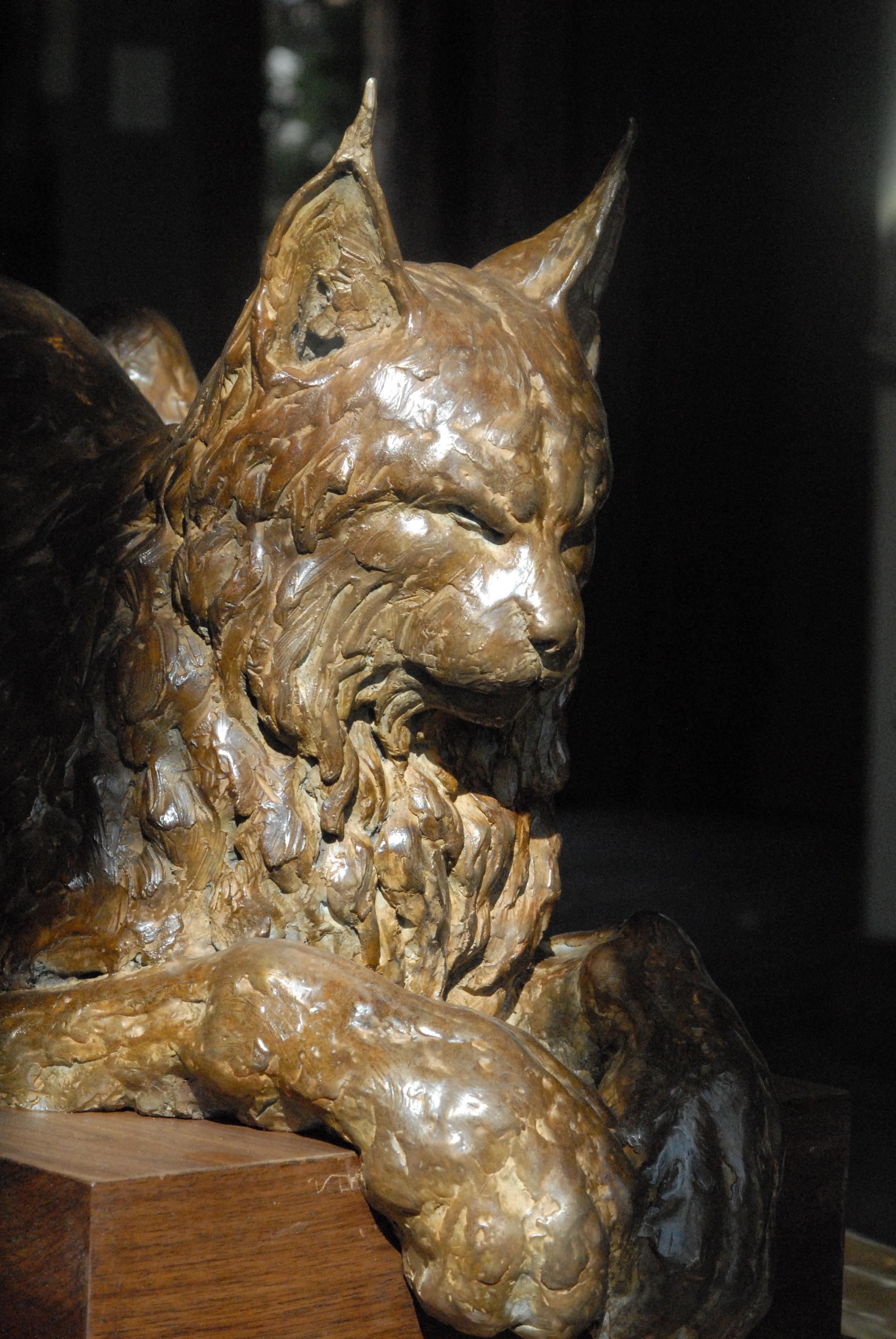 Cat Nap Detail
