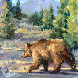Grizzly - study