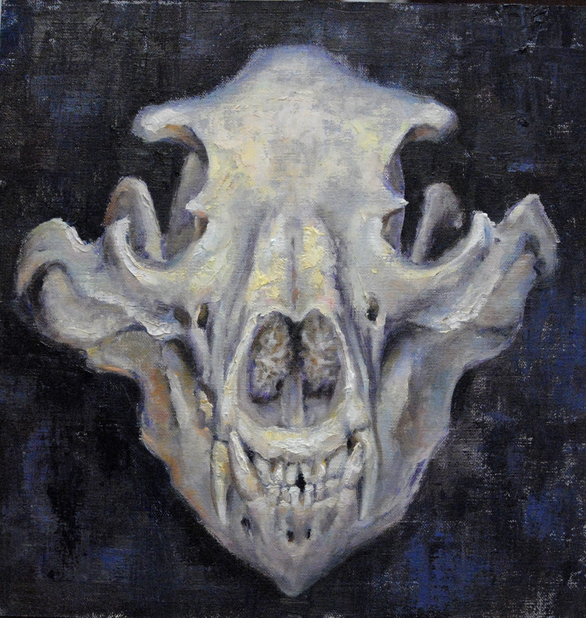 Grizzly Skull