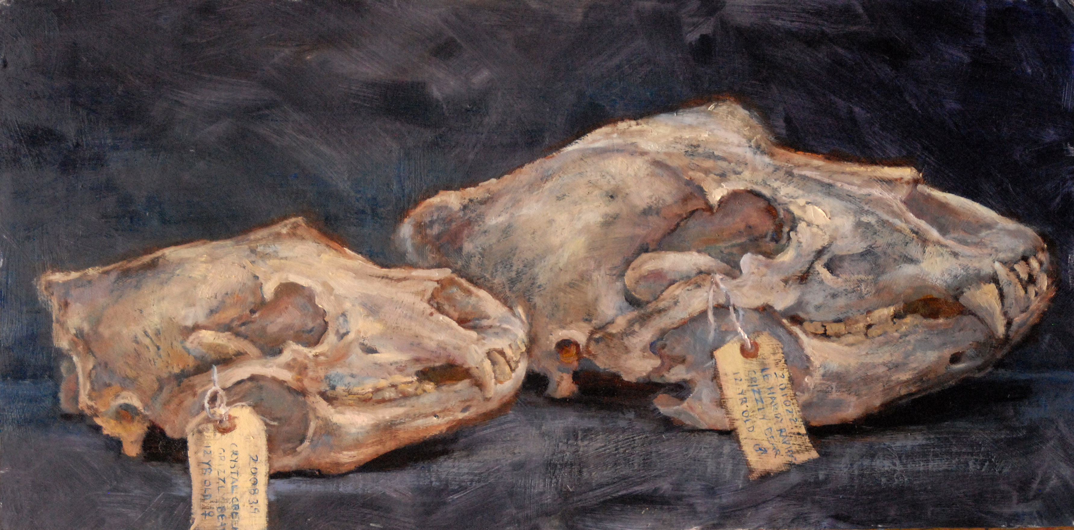 Grizzly Skulls - male and female