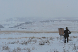 Shirl painting in Lamar Valley