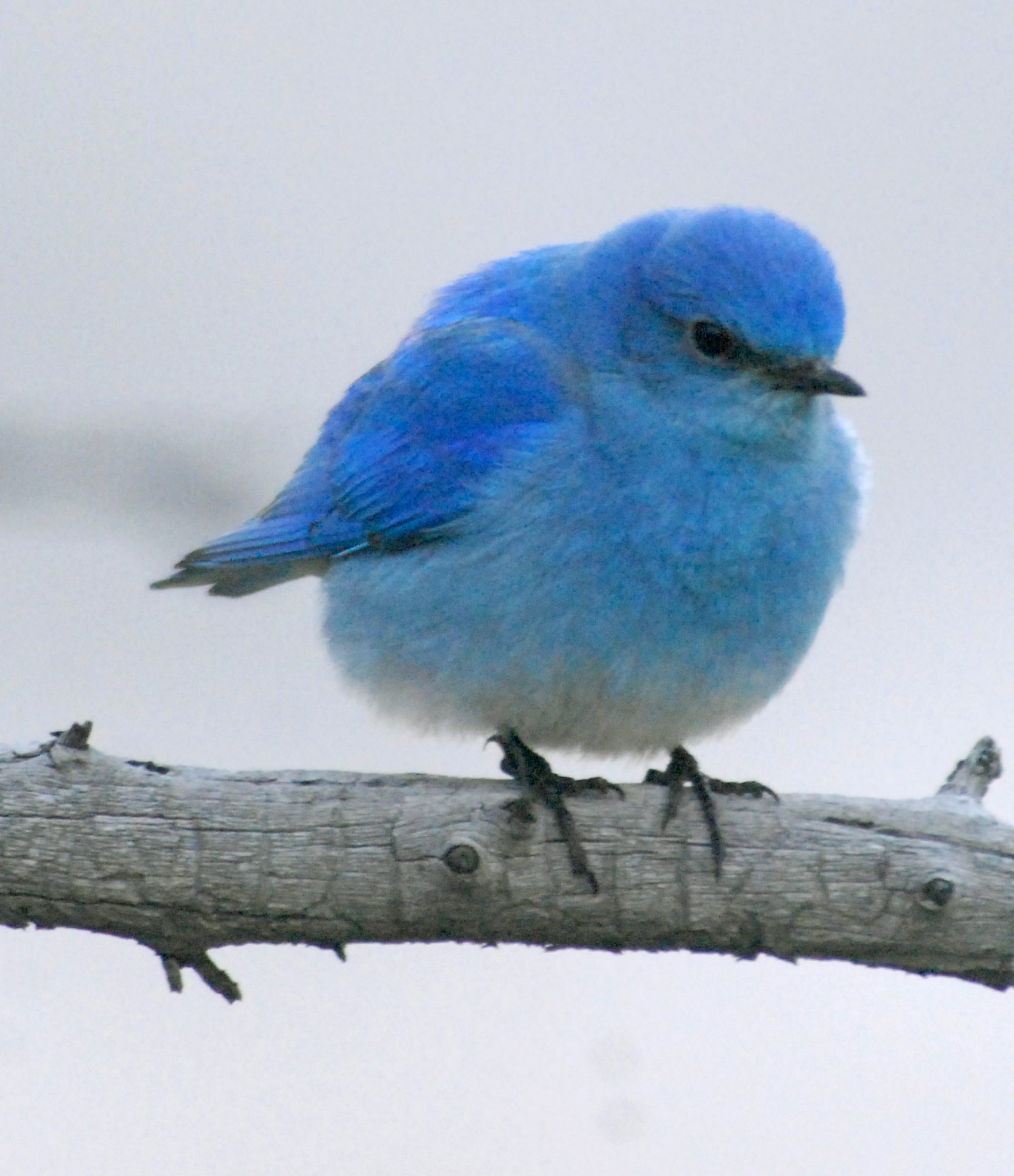 blue bird 20110617_1740