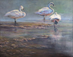 Respite - Swan Trio