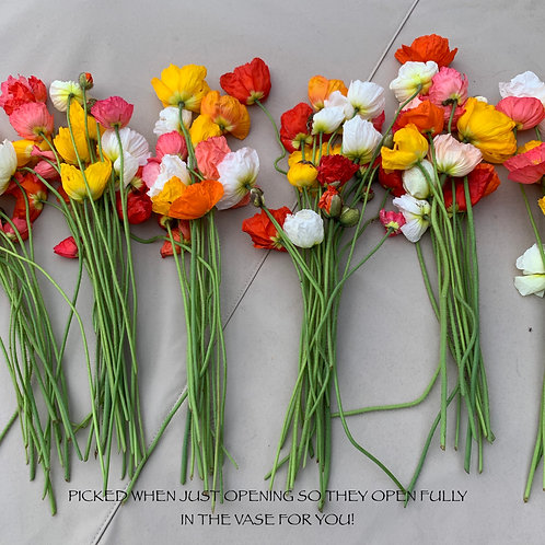 Iceland Poppy Bouquets