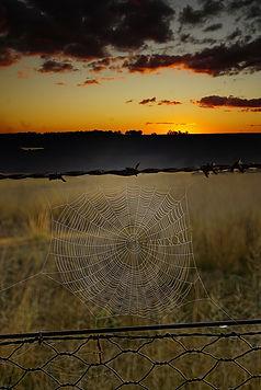 DSC04415 spider web copy.jpeg