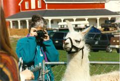 Polly photographing llama FFD 19970001.j