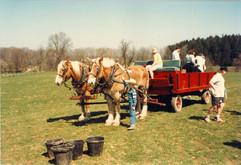 wagon rides FFD 19920001.jpg