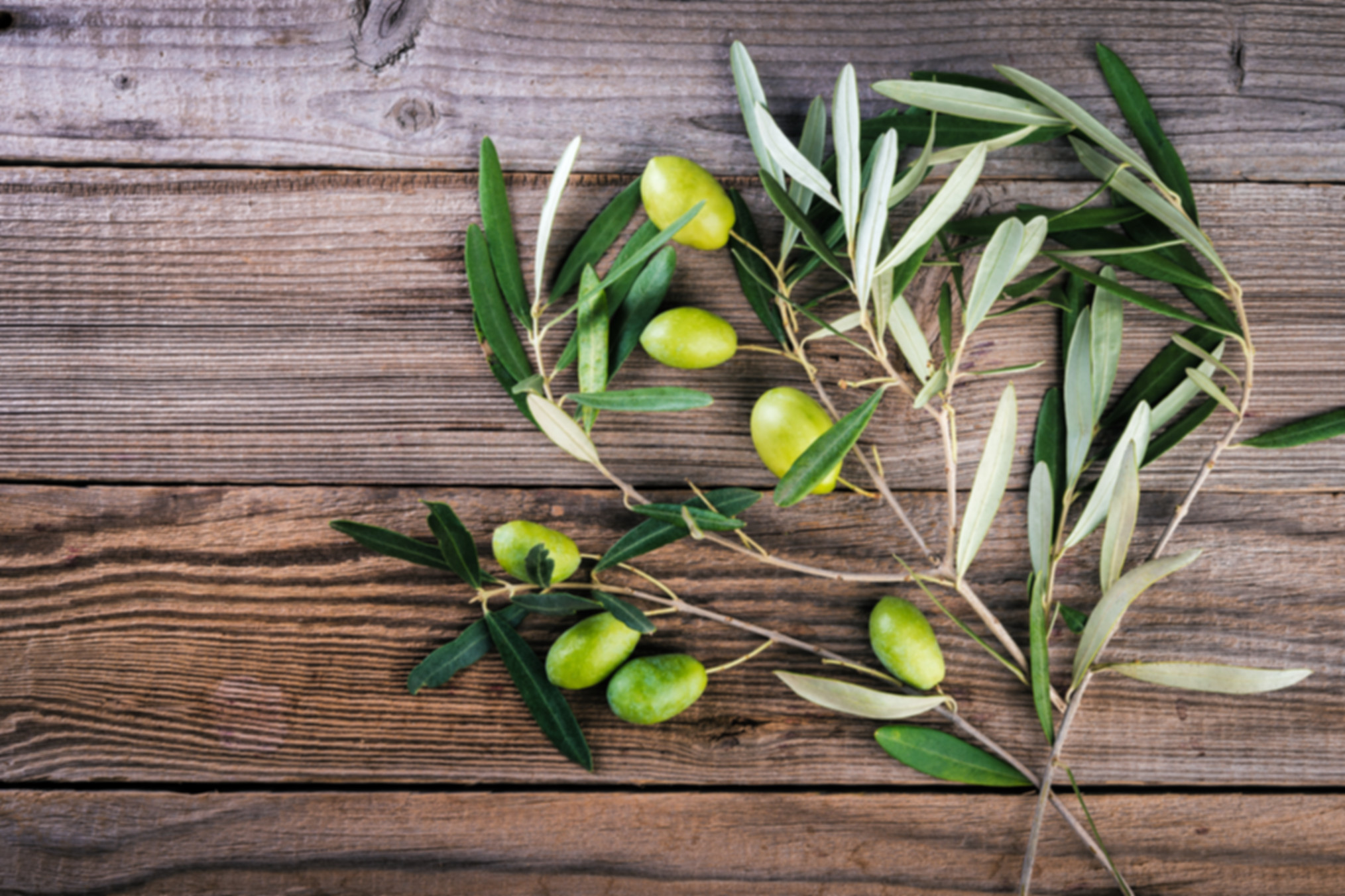 Olives on branches with leaves on a wood