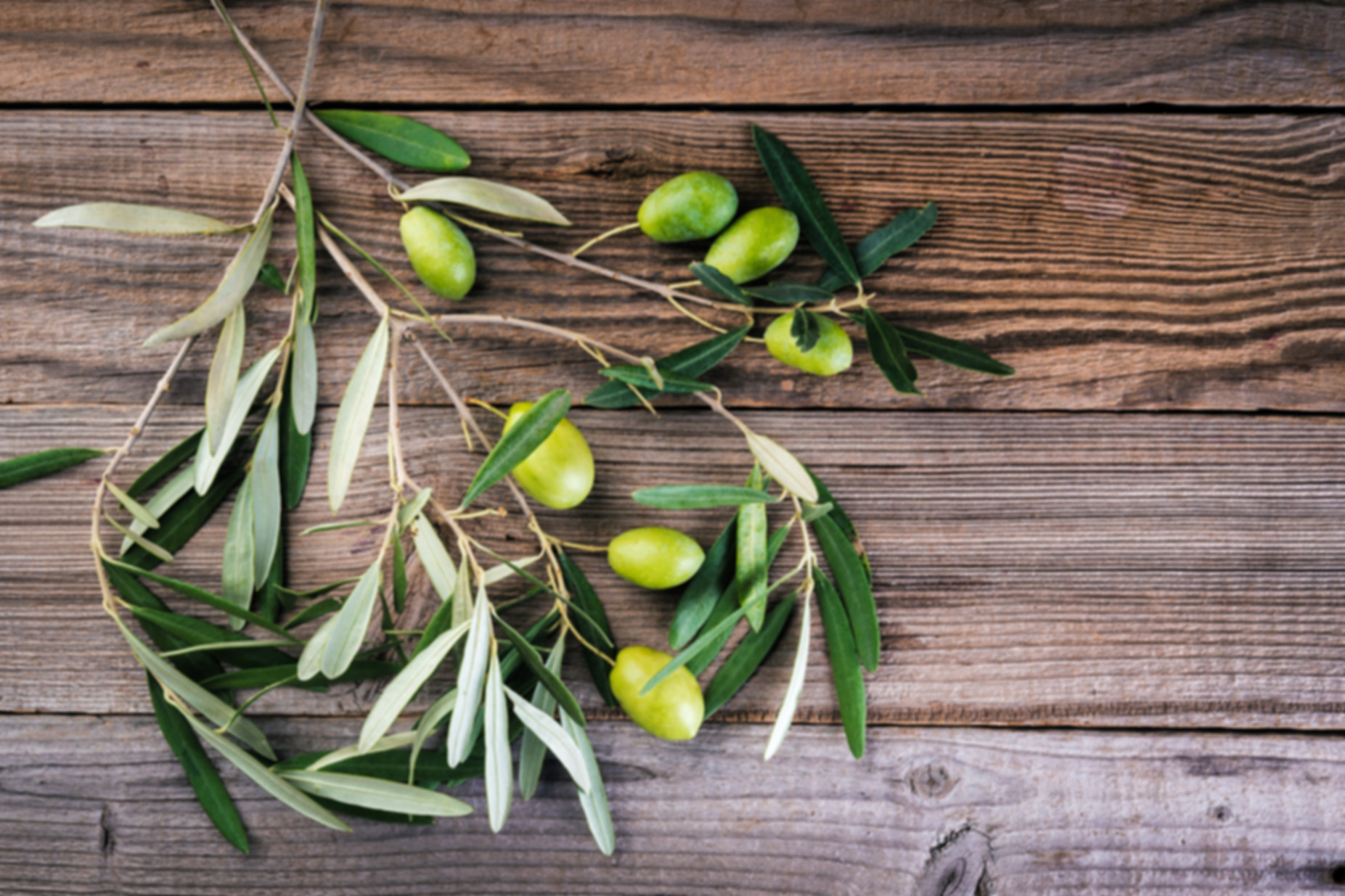 Olives%20on%20branches%20with%20leaves%2