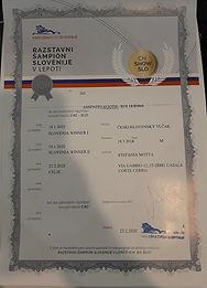 Assenzio Campione Sloveno.jpg
