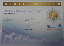 assenzio winter winner.jpg