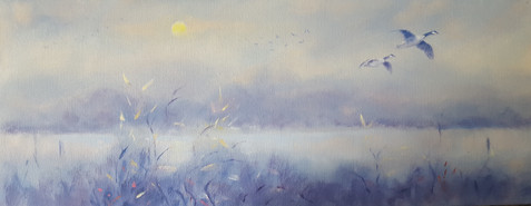 misty-morning-with-canada-geese