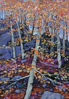Autumn Beech Trees, Achnamara
