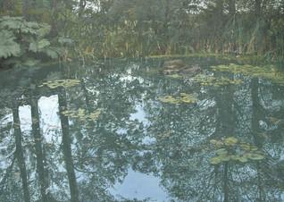 Lily Pond, Threave Gardens, Castle Douglas
