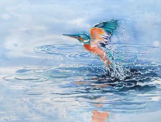 Kingfisher Rising