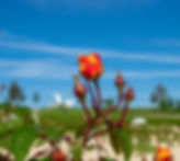 flower-4210525_1280.jpg