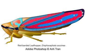 Created using Adobe Photoshop