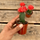 "Thumbnail: 2.5"" Red Grafted Moon Cactus"