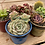 Thumbnail: DIY Succulent Garden, Glazed Pots with Soil and Rock Topper