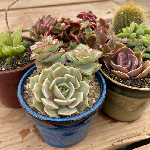 DIY Succulent Garden, Glazed Pots with Soil and Rock Topper